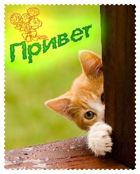 прикольные открытки: